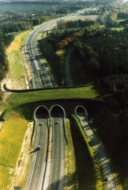 állati híd
