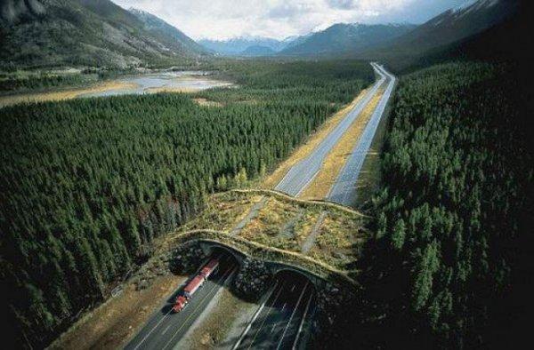 banff-national-park-alberta-canada-animal-bridge