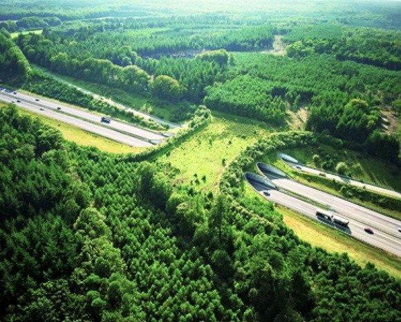 holland híd állatoknak