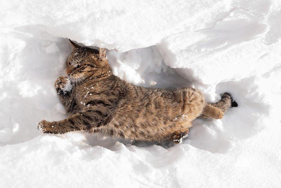 Životinje i sneg  - Page 5 Cic%C3%B3ka