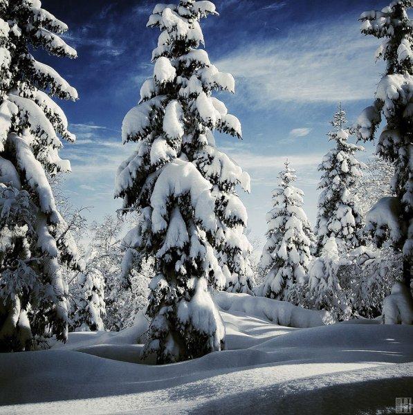 havas fenyves