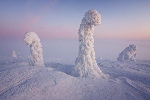megfagyott fák, Lappföld, Finnország