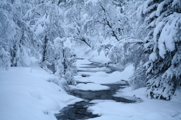 svéd tél